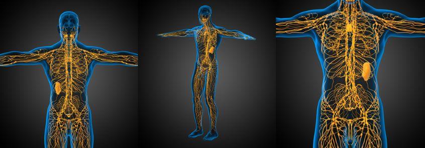 Zdravá lymfa nám může pomoci s hubnutím. Jak mízní systém funguje?