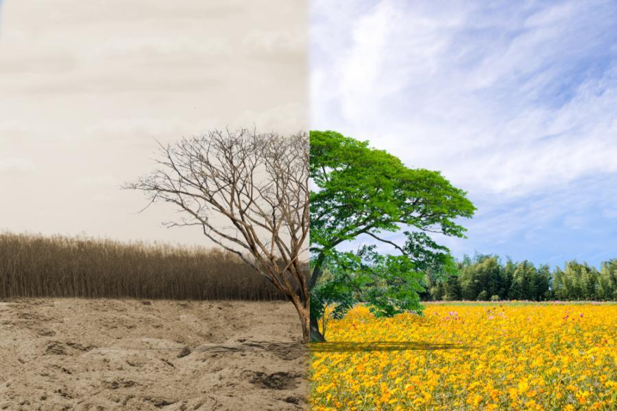 Živočišné tuky versus rostlinné – které představují větší zátěž pro životní prostředí?
