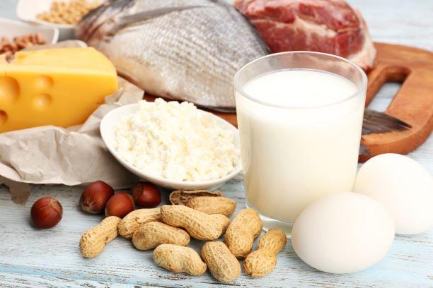 Zdroje bílkovin