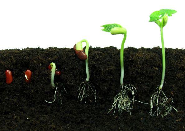 Zelené klíčky - domácí úroda plná vitaminů za pár dní