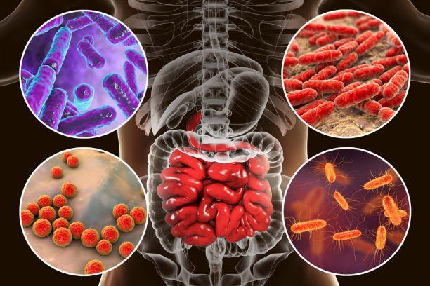 Jak ozdravit mikrobiotu? Drobný chronický zánět střev oslabuje organismus