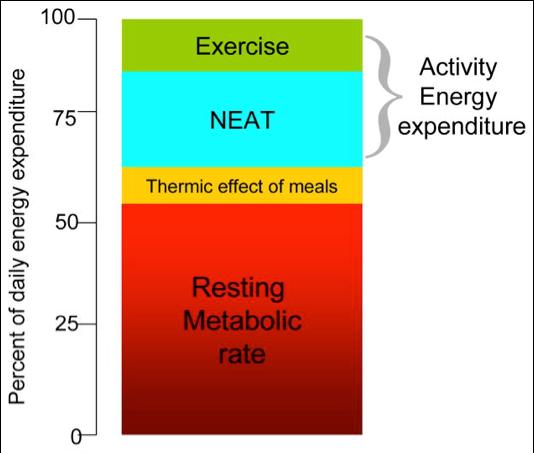 Energetický výdej