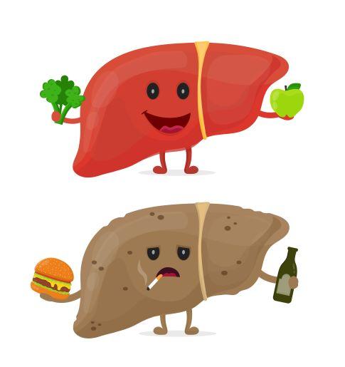 Zdravá a nemocná játra