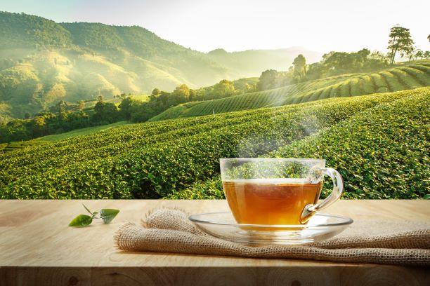 Čaj ukrývá energii i zdraví. Má příznivý vliv na nízký tlak i vysoký cholesterol