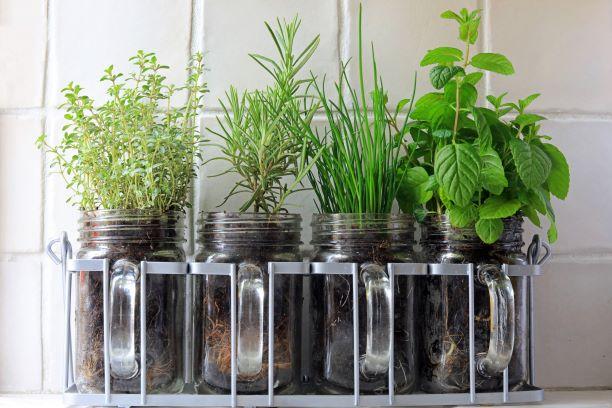 Aktivní látky v bylinkách mají preventivní i léčivé účinky