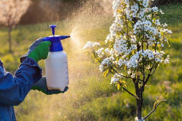 Pesticidy v ovoci a zelenině jsou toxické. Na citrusy saponáty ale nepoužívejte