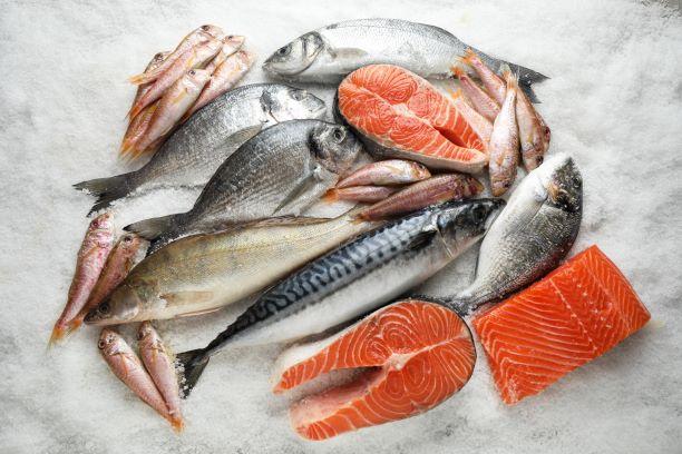 tučné ryby