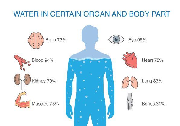 voda v těle