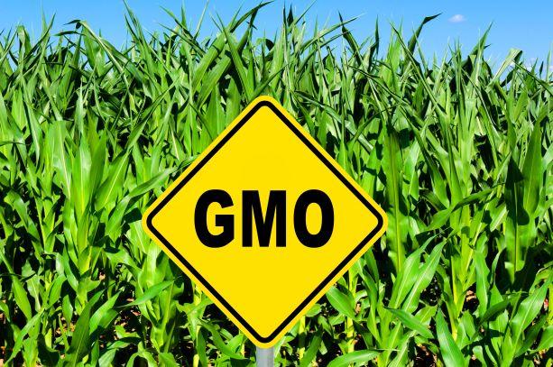 Geneticky modifikované organismy - ano, či ne?