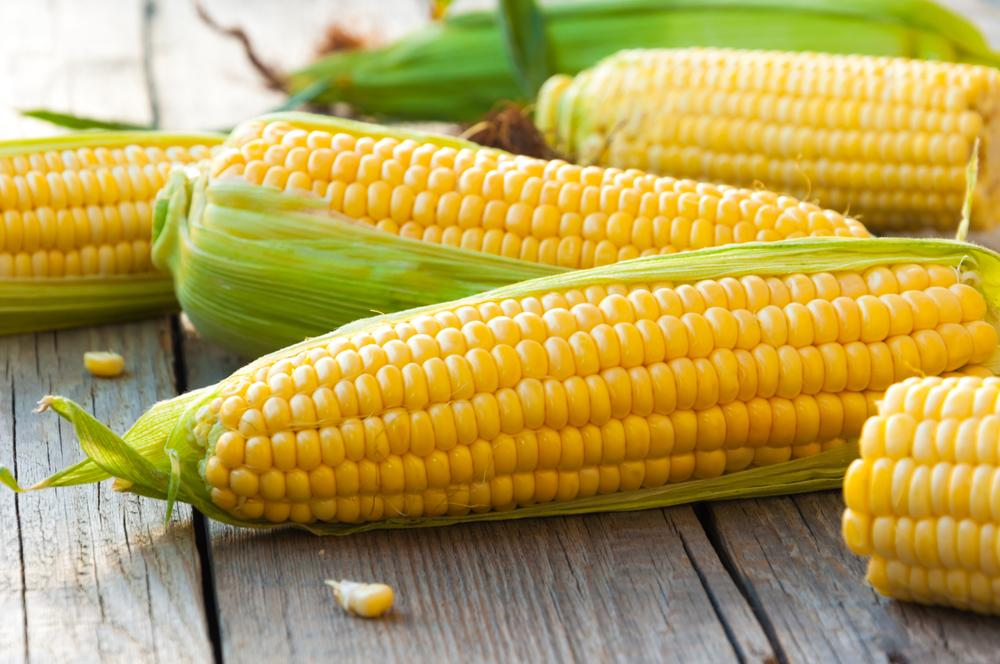 Kukuřice cukrová – zelenina sladká jako ovoce
