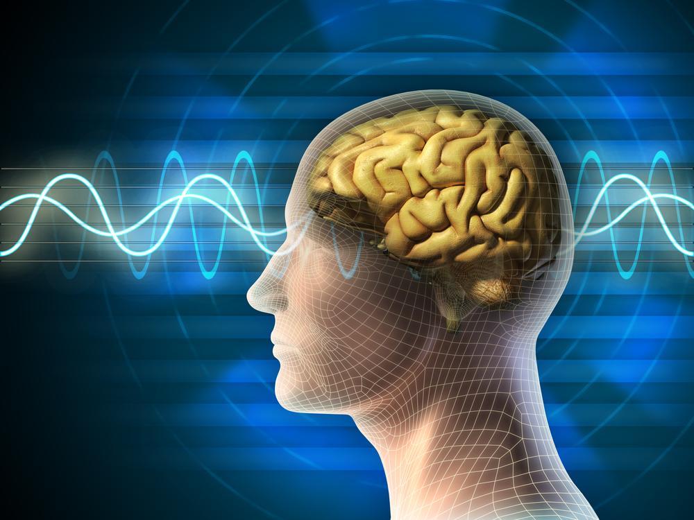 Množství a kvalita stravy mají značný vliv na činnost mozku
