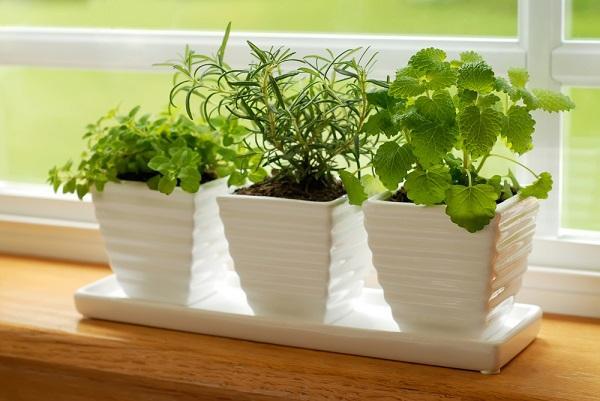 Jarní zelené byliny