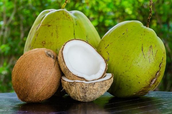 Kokos zelený a zralý ořech