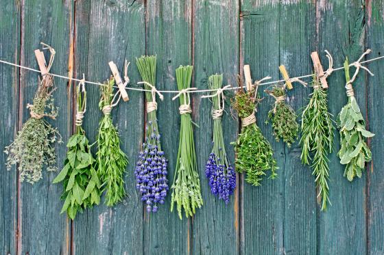 Přichystejte si bylinkový rok