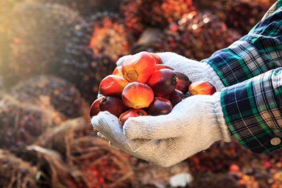 Nevěřte všemu, co (u)slyšíte o palmovém oleji